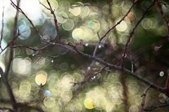 Bubblor (Ättestupa) Tags: sony a7 meyer görlitz optik diaplan 100mm 28