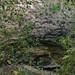 bats cave