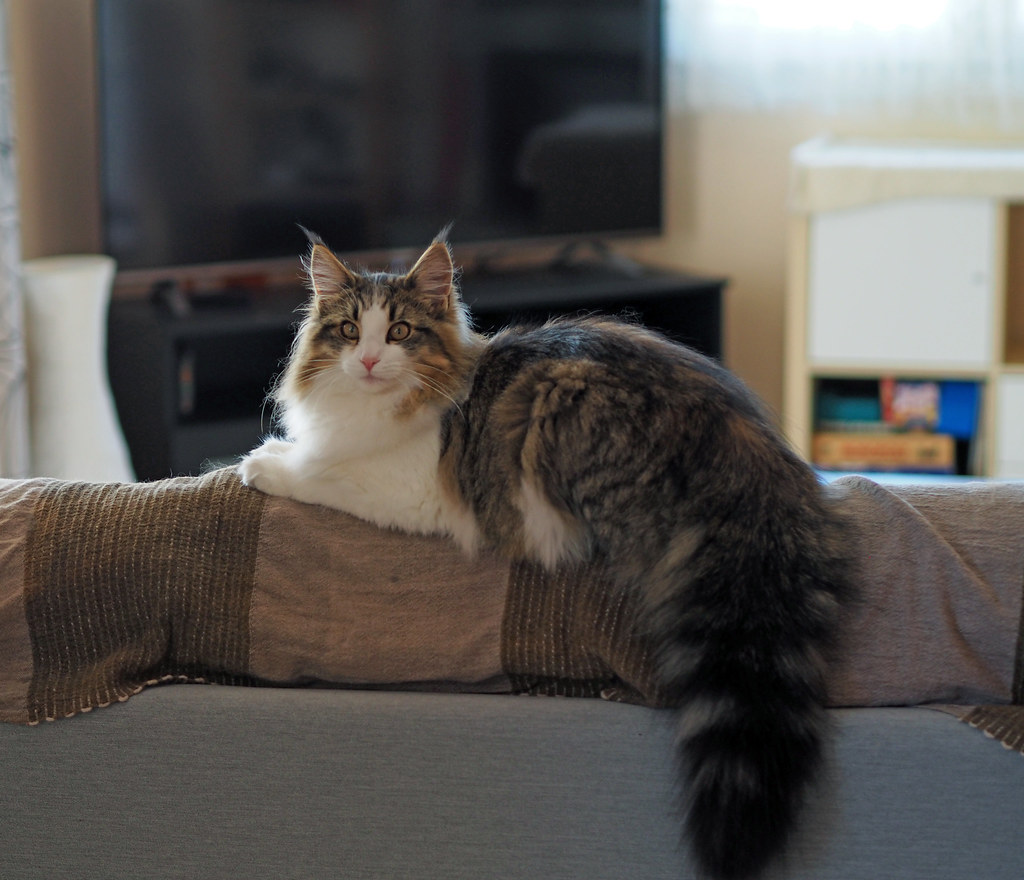 The World's most recently posted photos of cat and cattery - Flickr