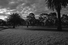 Ominous (OzGFK) Tags: 35mm australia jch400 japancamerahunter nikkor nikon victoria analog blackandwhite contrast film monochrome redfilter streetphotography urban ominous clouds cloudy cold park palmtrees winter july2018