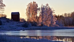 Morning light (Stefano Rugolo) Tags: stefanorugolo pentax k5 pentaxk5 smcpentaxm100mmf28 kmount ricohimaging backlight landscape countryside lake water tree reed barn ice hälsingland sverige sweden