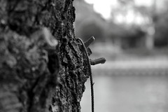 Remnants of the Forgotten (Robin Shepperson) Tags: tree monochrome blackandwhite bw grey dead death rope old forgotten stump broken berlin germany d3400 nikon bokeh nature discarded gone