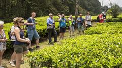Visit to a tea plantation (Hans van der Boom) Tags: holiday vacation indonesia indonesië asia java westjava tea plantation people id