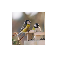 (a└3 X) Tags: natur nature alexfenzl olympus outdoor makro macro austria color macrofotografie wildlife 3x a└3x availablelight bokeh closeup wow