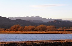 A Moody Evening (Patricia Henschen) Tags: bosquedelapache nwr nationalwildliferefuge national wildlife refuge newmexico socorro mountain mountains clouds wetland grasses cloud trees sanantonio shadows birds winter goldenhour