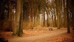 (farmspeedracer) Tags: nature winter wald forest foliage march 2019 märz loneliness cold silence bench sit sitting hide rest moment time