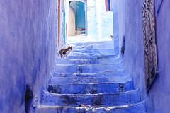 Chaoue (BorjaiGlesias) Tags: chaoue marruecos azul cat fujifilm