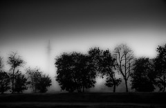 .... (robertoburchi1949) Tags: blackwhite bianconero trees alberi mist dawn sky lights shadows