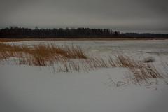 IMG_9052_edit (SPihtelev) Tags: ладога ленинградская область озеро зима лед льды вода маяк