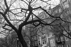 A Tree on Eastern Parkway (Zach K) Tags: tree arbor fall autumn winter noleaves bare changing seasons easternparkway eastern parkway brooklyn ny nyc walkway fujifilm fuji x100f acros