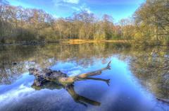 The Lost Pond (ArtGordon1) Tags: february 2019 eppingforest essex countyofessex england uk davegordon davidgordon daveartgordon davidagordon daveagordon artgordon1 trees reflections reflection lostpond blackweirpond suicidepool
