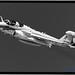 BLACK & WHITE OF ZE LAST NAVY EA-6B PROWLER LEAVING NASWI FOR ZE LAST TIME