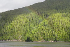 IMG_6965 (Forestplanet) Tags: great bear rainforest 2017