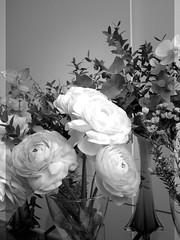 harada-flowers-88 (annie harada) Tags: flowers hana blumen fleurs bouquet noir et blanc black white