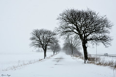 In a (-n almost) monochrome winter world (DameBoudicca) Tags: sweden sverige schweden suecia suède svezia スウェーデン lund linero tree träd baum arbre árbol albero 木 snow snö schnee nieve neige neve 雪 road väg weg route camino via 道