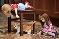 How to decorate a cat! (Vlastelin Nichego) Tags: toys volks iplehouse judy judytravelbjd