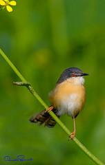 104132560 (TARIQ HAMEED SULEMANI) Tags: sulemani tariq tourism trekking tariqhameedsulemani winter wildlife wild birds nature nikon