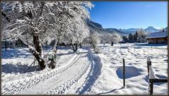 At home now ! (watbled05) Tags: arbres branche champ extérieur givre hautesalpes massifdesecrins montagne neige paysage sentier vallouise chemin traces empreintes