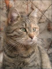(Tölgyesi Kata) Tags: cat katze chat gatto katt gato neko macska felsőkert budaiarborétum withcanonpowershota620 garden uppergarden spring tavasz animal budapest