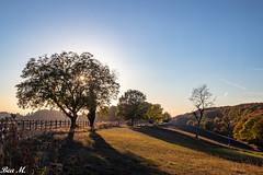 Odenwald (trixi.mi) Tags: photo bergstrasse wandern landschaft odenwald sonne oktober landscape geniesen fotografieren baum wald natur bensheim