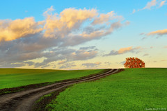 Roman Countryside (Claudio_R_1973) Tags: landscape italy nature tree field