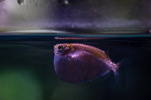 At the S.E.A Aquarium, Singapore.