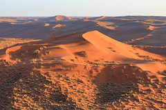 Footprints (Nicolas Rénac) Tags: aerial aerialphotography aerialview vueaérienne above plane sand dunes orange sunrise sun desert namibia early morning namib désert landscape paysage sossusvlei africa dune helicopter hélicoptère sable hill erg namibnaukluftnationalpark namibnaukluft düne bush bushes
