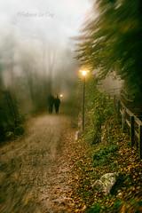 Engrenages (Fabrice Le Coq) Tags: vert flou nuages ciel lumières silouhètes zurich valais suisse forêt arbres fabricelecoqfoto