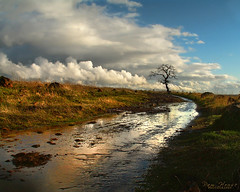 Hope After The Storm (Pam House) Tags: rain spring water clouds bidwellpark chico california buttecounty landscape lonetree 7672