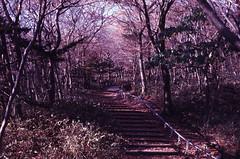 .I try to walk gently on this earth. (Camila Guerreiro) Tags: film expiredfilm fuji pentaxmesuper jeju island southkorea fujichrome camilaguerreiro analog 64t expired grain