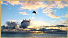 Amazing Sunset! The Sky as a Kanvus AGAIN! (medaibl) Tags: seagul clouds beautiful orange yellow gray blue sky water horizon balck pink centralcoastofcalifornia skylikeakanvus surf sunst wonerful