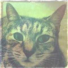 I live below the seventh floor (Rantz) Tags: rantz mobilography 365 roger doesanyonereadtagsanymore victoria melbourne caturday cats johnslens kodotxgrizzledfilm hipstamatic bonnie cat animal