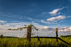 Clear Day (Seminole Digital) Tags: fence blue sky vine post green clouds