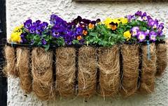P1080585 (KENS PHOTOS2010) Tags: flowers gardens gardening