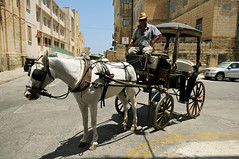 Horse cart in the streets of Valletta - Malta (PascalBo) Tags: nikon d300 malta malte valletta lavalette capital capitale europe street rue man homme horse cheval animal people unesco patrimoinemondial worldheritage outdoors outdoor pascalboegli