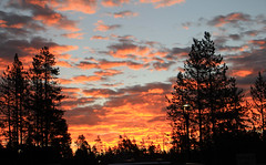 Sunrise (jpotto) Tags: usa wyoming canyonvillage yellowstone sunrise silhouette yellowstonenationalpark