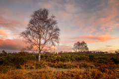 Dunwich Forest, Suffolk (Simon Brimacombe) Tags: 2019 dunwich dunwichforest january suffolk forest sunrise winter tree heath landscape landscapephotography clouds