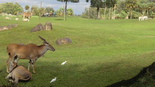 "Florida - Tampa:  Busch Gardens Theme Park - The ""Serengeti Plain"" animal habitat"