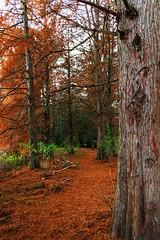 Autumn colors (Noar.pics) Tags: tree colors autumn