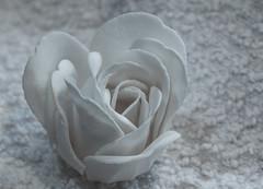 White on white (mimsjodi) Tags: hmm macro rose white challenge macromondays flower whiteonwhite