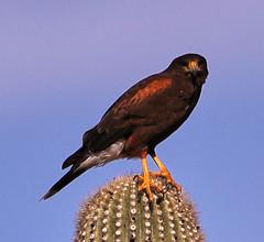 01-07-19-0043842 (Lake Worth) Tags: nature arizona tontonationalforest sonorandesert