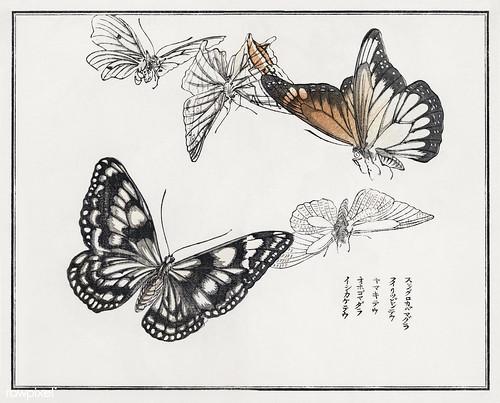 Butterflies illustration from Churui Gafu (1910) by Morimoto Tok