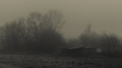 A place I love (Netsrak) Tags: baum bäume eifel europa europe herbst landschaft natur nebel wald autumn fall fog landscape mist nature woods
