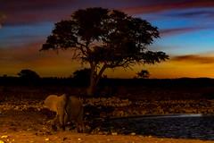 _RJS3116 (rjsnyc2) Tags: 2019 africa d850 namibia night nikon outdoors photography remoteyear richardsilver richardsilverphoto safari sunset travel travelphotographer animal camping nature stars tent wildlife