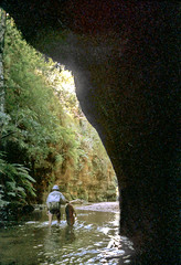 Bell Creek Canyon, Wollongambe Wilderness, Blue Mountains National Park, NSW, April, 1982. (garratt3) Tags: aus bluemountains bluemountainsnationalpark bushwalking film pentax rural kanangaraboydnationalpark takumar kodachrome wilderness australia nsw newsouthwales wollongambewildderness