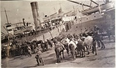 WW1 horses embarking on Troopship A39 at Port Melbourne, Australia (Aussie~mobs) Tags: 1915 royalaustraliannavalbridgingtrain horses ww1 soldiers embarkation portmelbourne victorial australia military army war troopship a39 lestweforget anzac