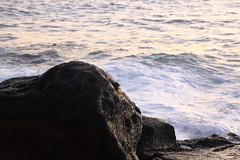 Crab 3 (jtbradford) Tags: kauai hawaii