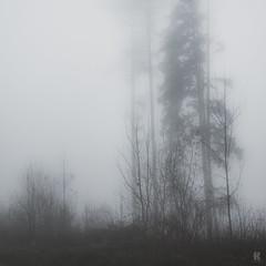 In the Fog II  /04 (KromOner) Tags: kromoner art design minimal dark nature forest trees woods silent solitude silence mood atmosphere quiet canon austria fog foggy mist misty winter