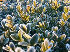 """Frost-Tage (warata) Tags: 2018 deutschland germany süddeutschland southerngermany schwaben swabia oberschwaben upper swabia"""" """"schwäbisches oberland """"badenwürttemberg"""" badenwuerttemberg """"samsung galaxy note 4"""" blume blüte pflanze nature outside landscape garden"""