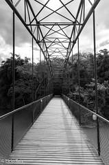 Bridge over the river Paraíba do Sul (elcio.reis) Tags: brasil sãopaulo guararema nikon bridge brazil blackwhite pb bw ponte ilhagrande br